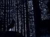 L'appel de la forêt - planche 6