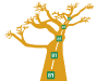 Baobab 81